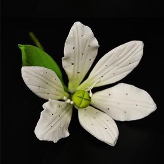 Petite Lily exotique blanche